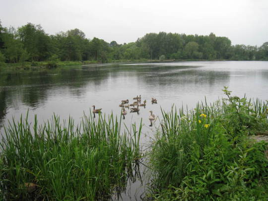 View of a lake adjoining Sulhamstead