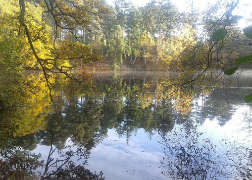 Picture of a lake and trees in autumn